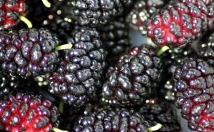 Amazing Health Benefits of Mulberry