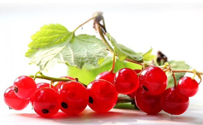 Amazing Health Benefits of Red Currants