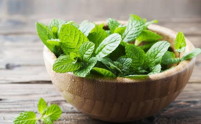 Health Benefits of Apple Mint
