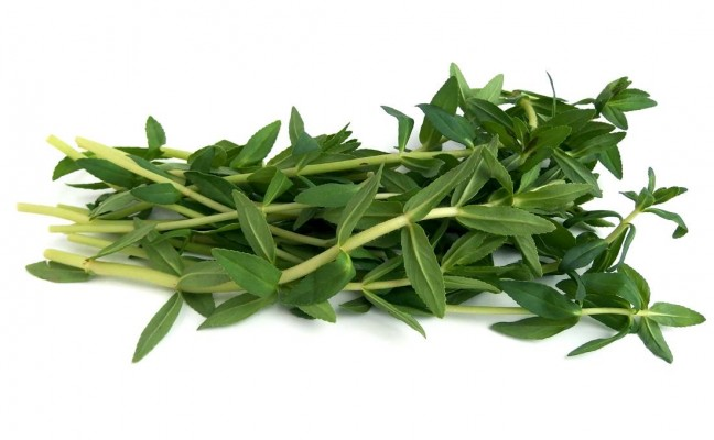 Health Benefits of Rice Paddy Herb