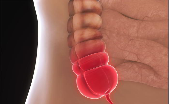 What is appendix?